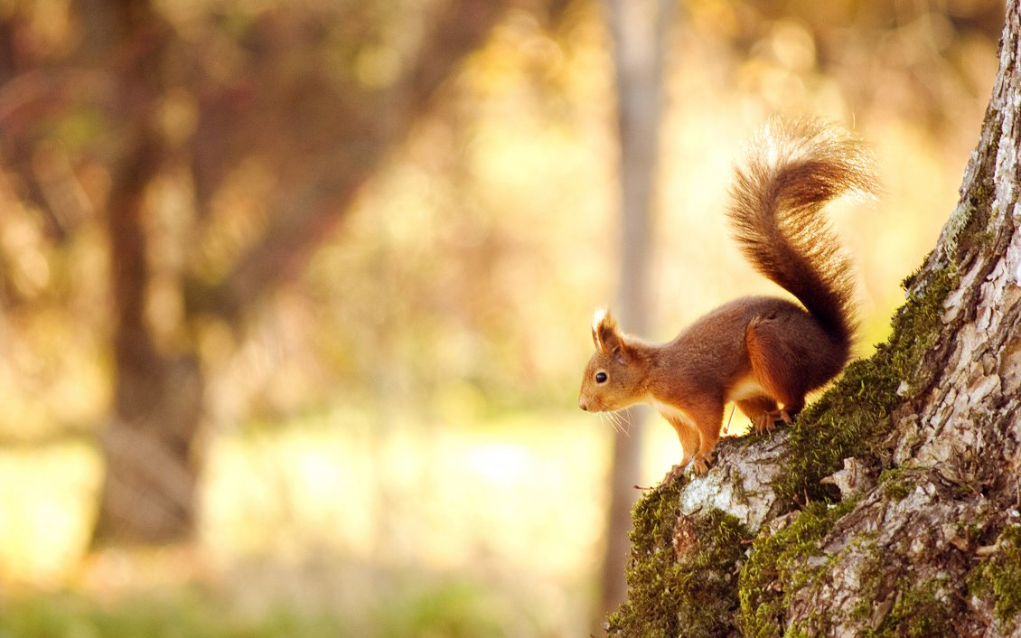 Download Wallpaper Beautiful little squirrel on a tree in the park