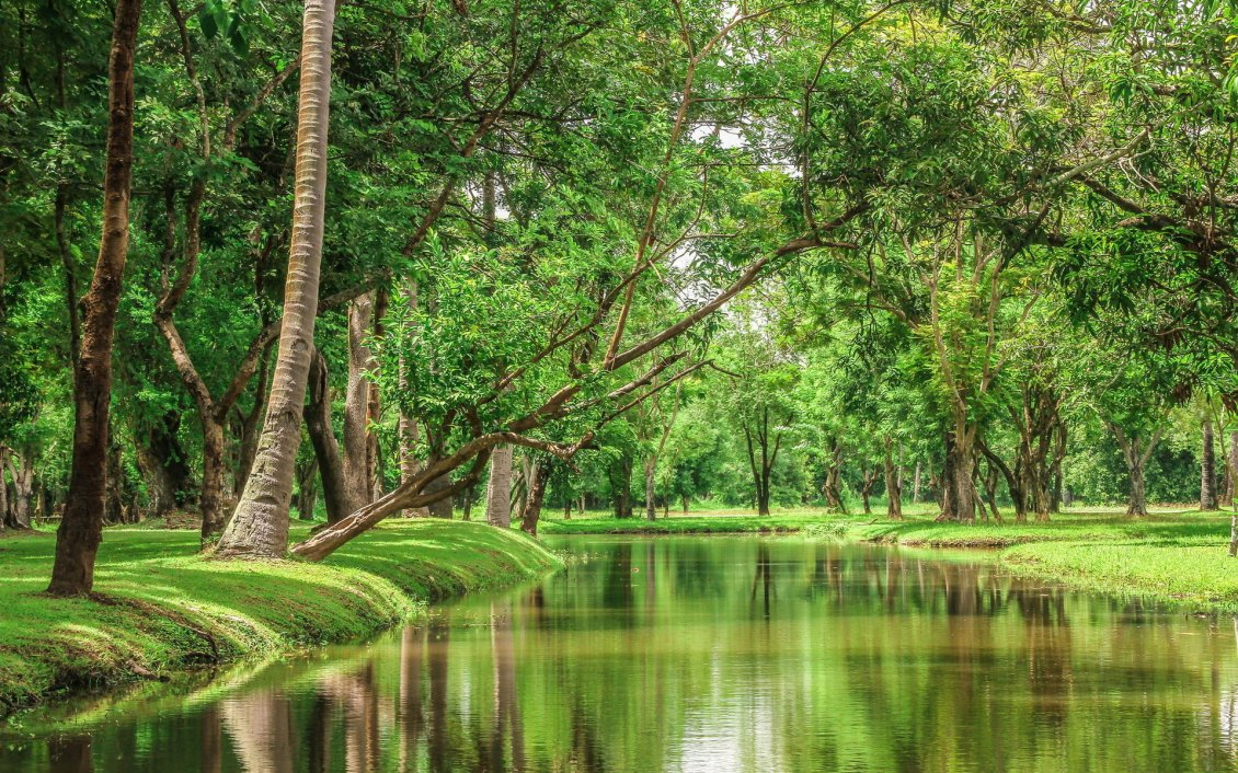 Download Wallpaper Beautiful nature - River in the green forest