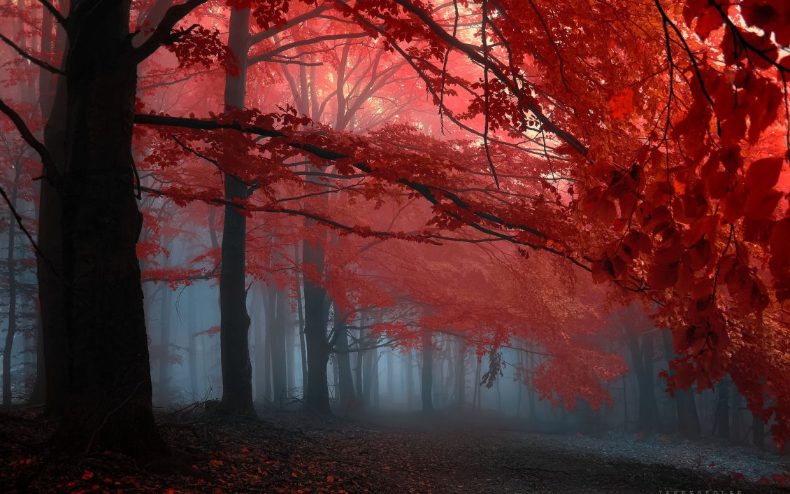 Download Wallpaper Red leaves in the sunlight and fog