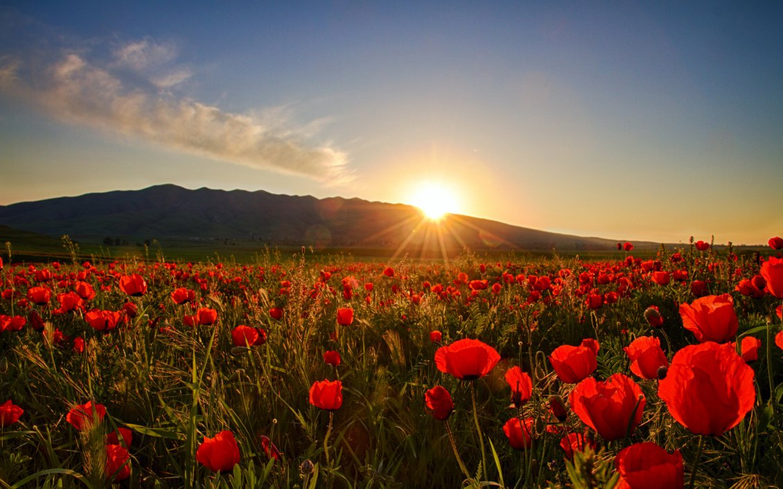 Nature Wallpaper Sunset Field With Poppies And Hills