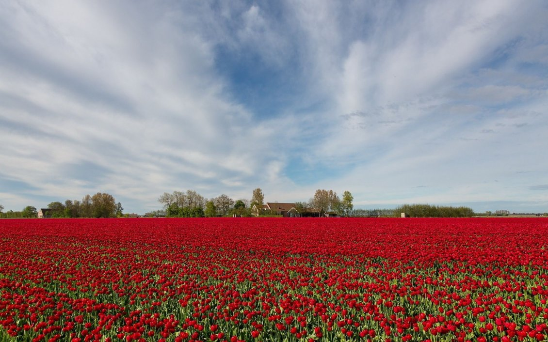 Download Wallpaper Field full of poppies