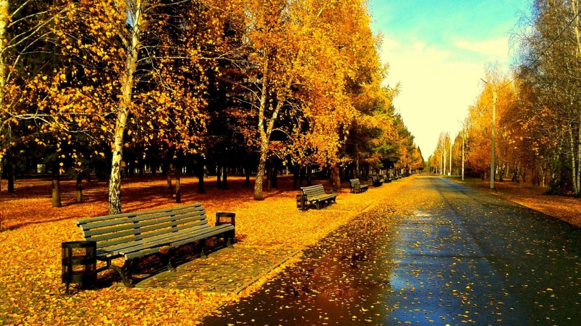 Download Wallpaper Autumn day in the park, dry leaves on the ground