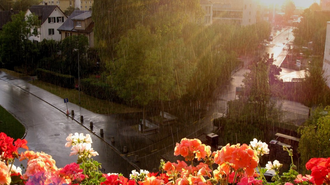 Download Wallpaper Colorful flowers in rain - Summer day