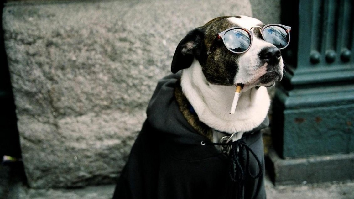 Download Wallpaper Dog with glasses and cigarette