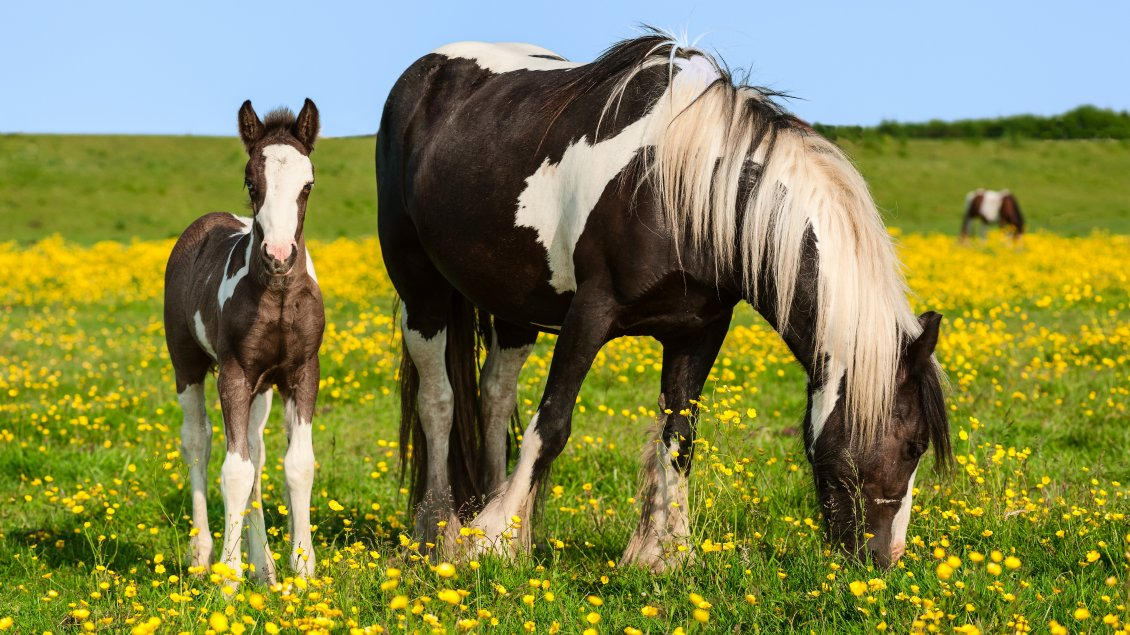 horses and flowers wallpaper - photo #20