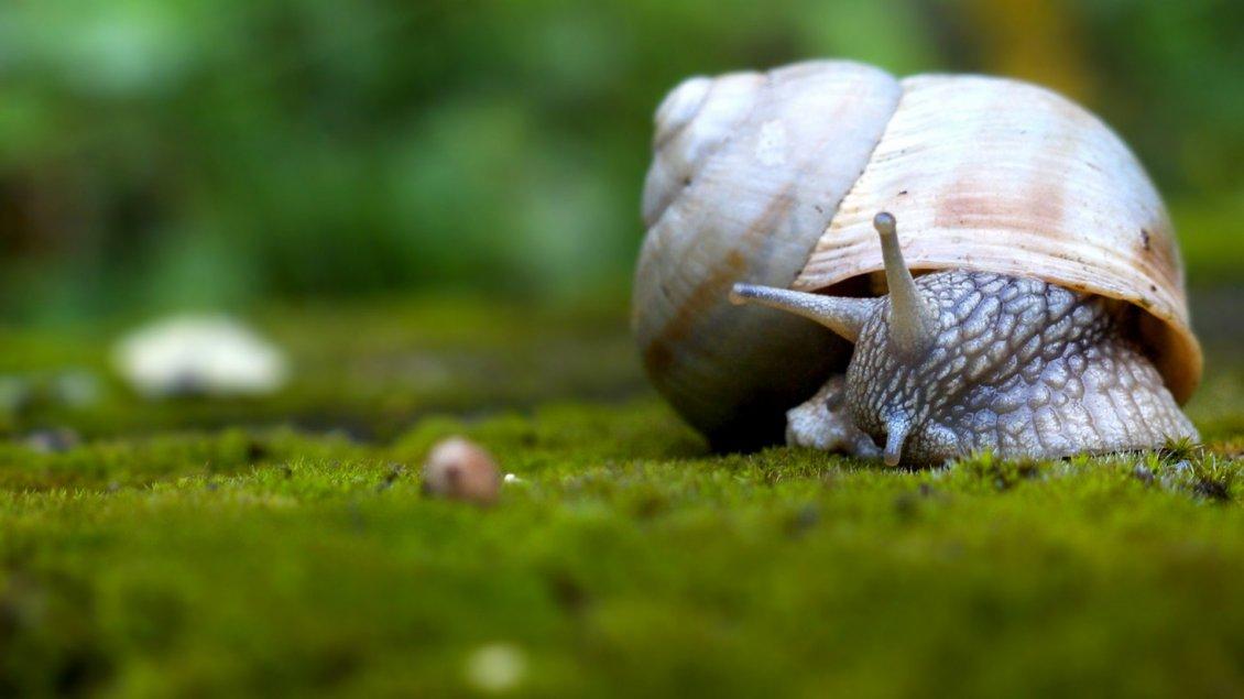 удивительный животный мир 8199_Snail-walking-on-grass