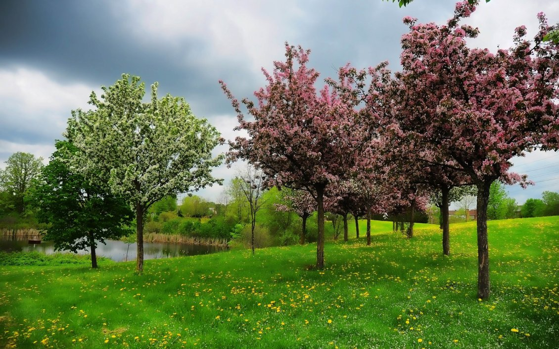 Download Wallpaper Orchard with blooming trees