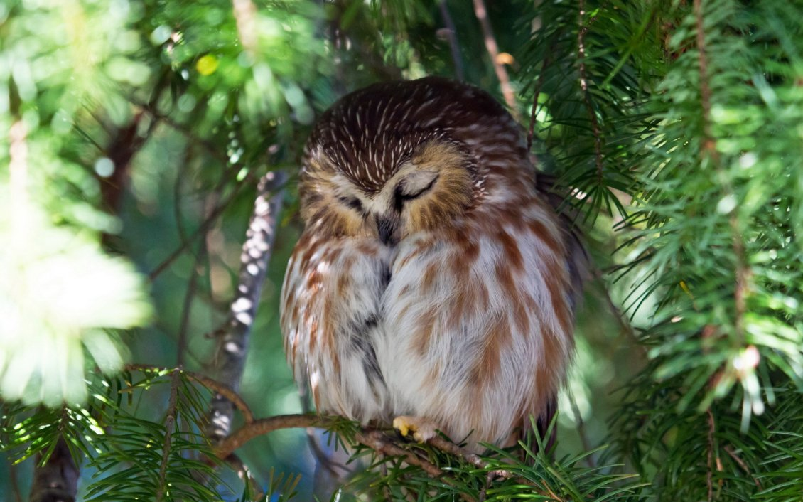 Sleeping Owl On A Branch In A Sunny Day