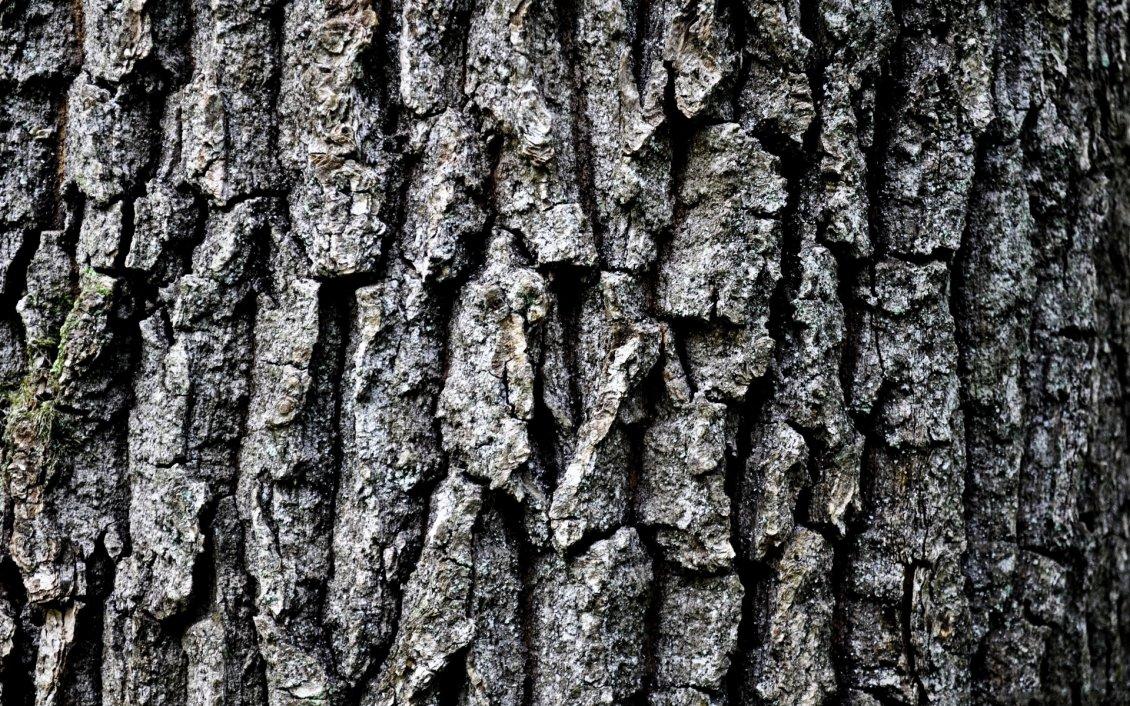 Grey Tree Bark Hd