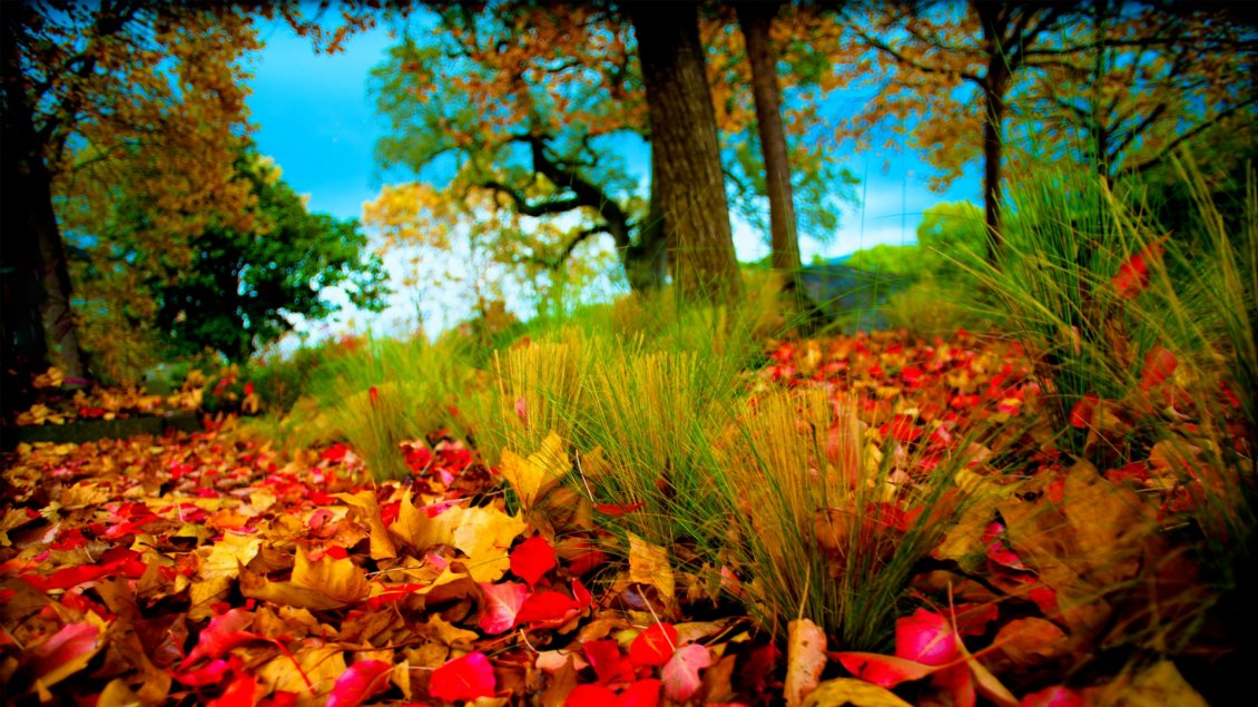 Download Wallpaper Autumn leaves on the field - beautiful nature wallpaper
