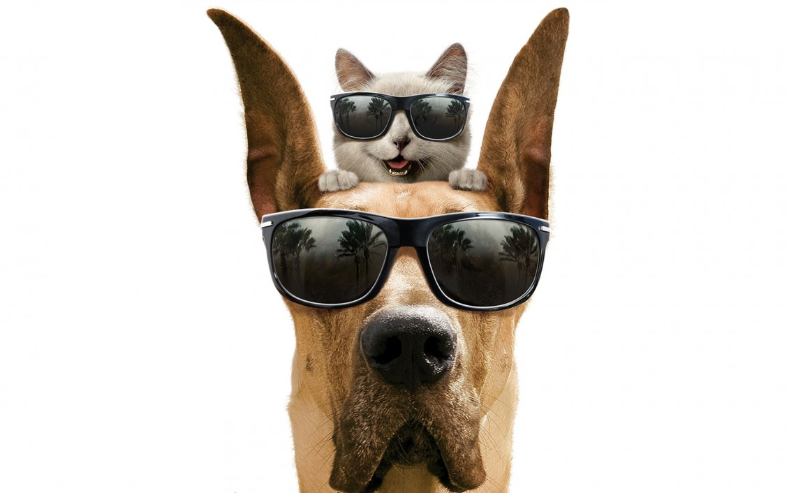 Download Wallpaper Dog and cat with glasses - The Marmaduke movie