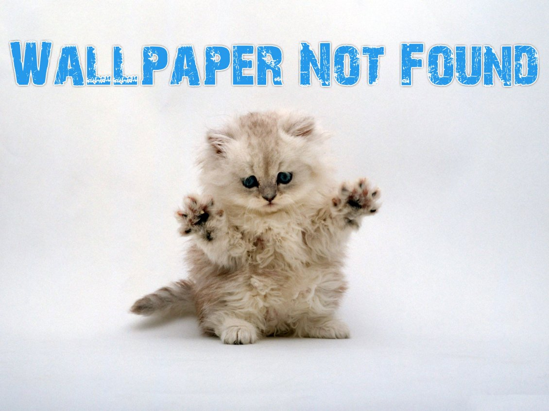 Download Wallpaper Wallpaper not found - Funny wallpaper