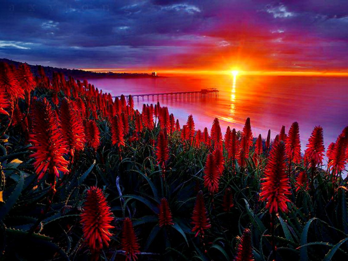 Download Wallpaper Red flowers on the hill in the sunset