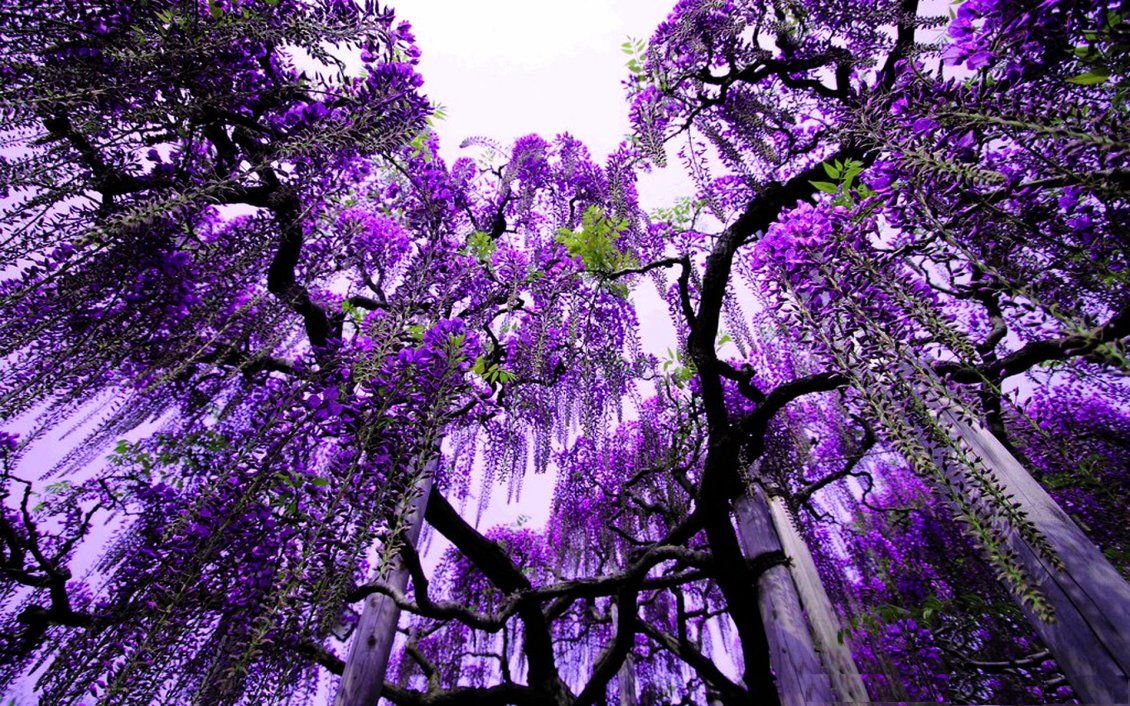 Purple Flowers In The Trees Abstract Wallpaper