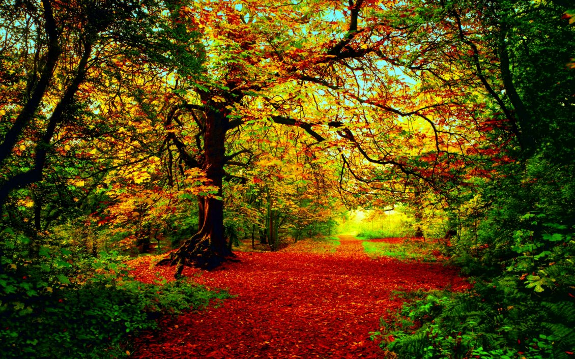 Download Wallpaper Red fallen leaves on the path in the forest