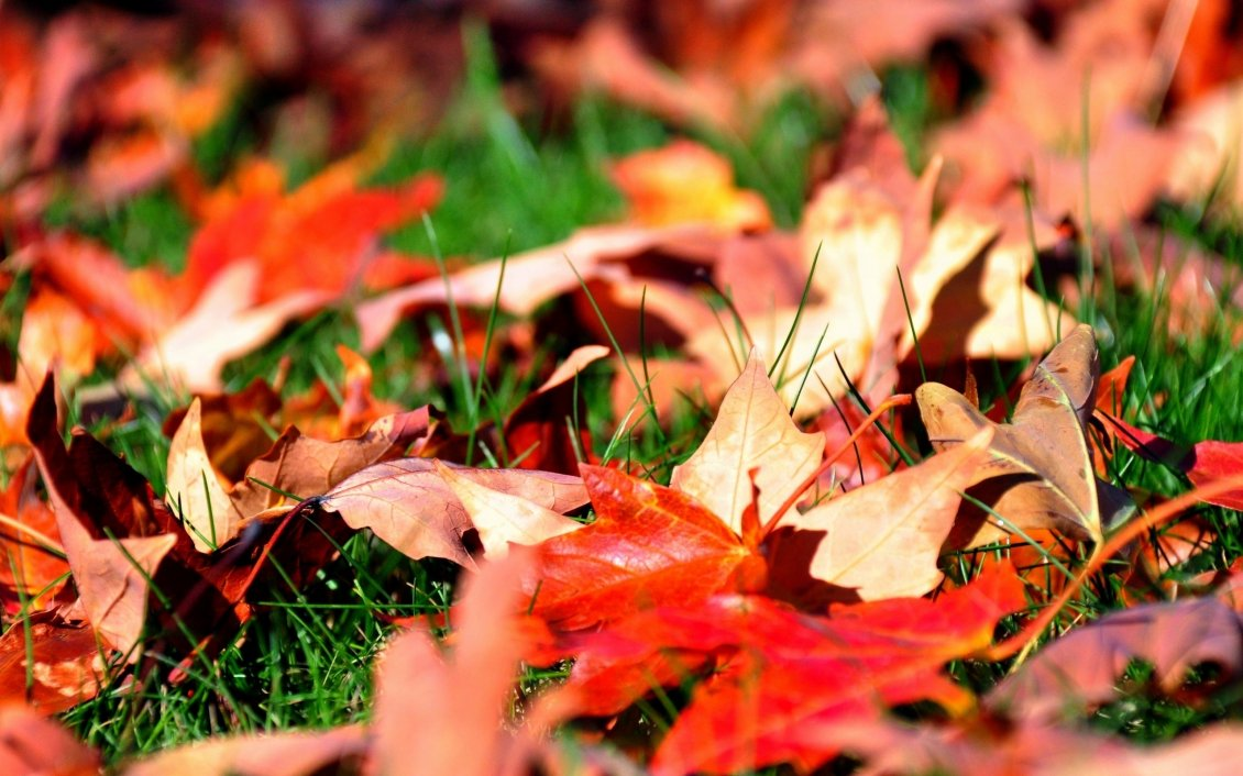 Download Wallpaper Dry red leaves fell in the grass
