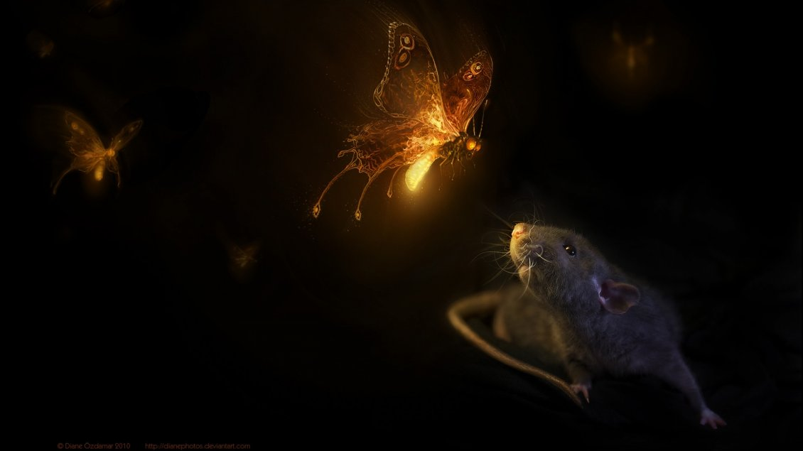 Download Wallpaper Butterflies with light in night and a mouse