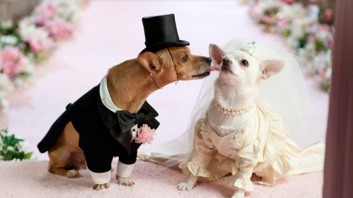 wedding between puppies cute animals