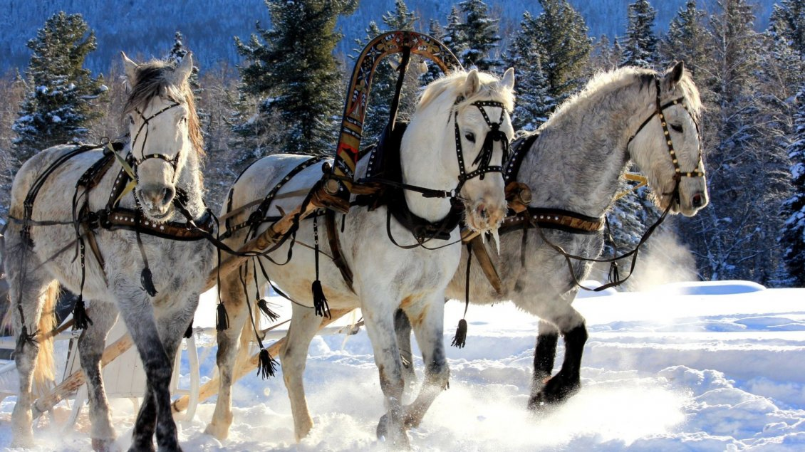 Download Wallpaper Three harnessed horses through snow
