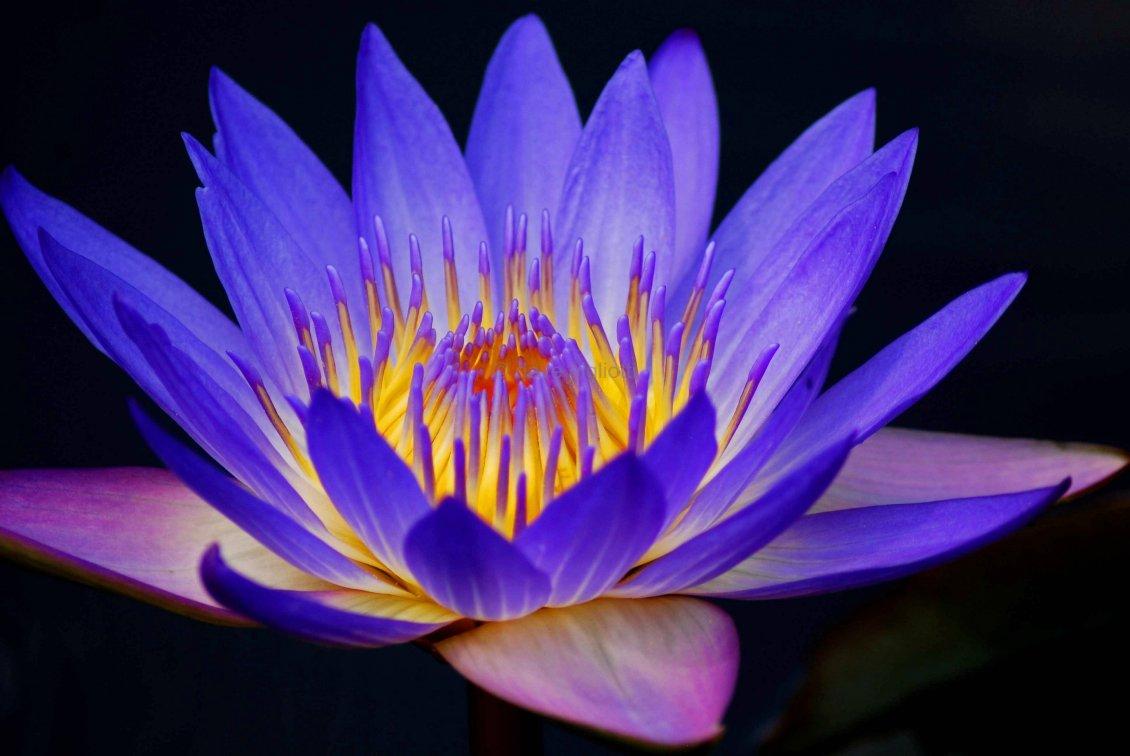 Beautiful Purple Flower With Yellow Center