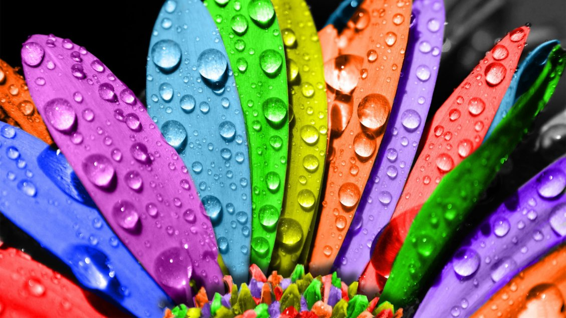 Download Wallpaper Colorful petals of flower with water drops