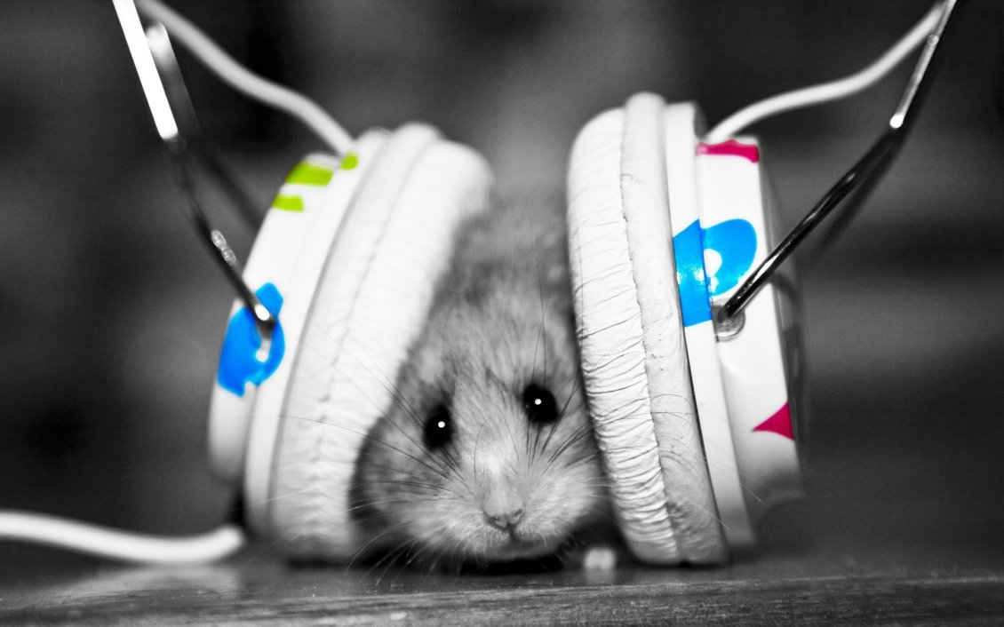 Download Wallpaper A mouse with headphones - Funny image