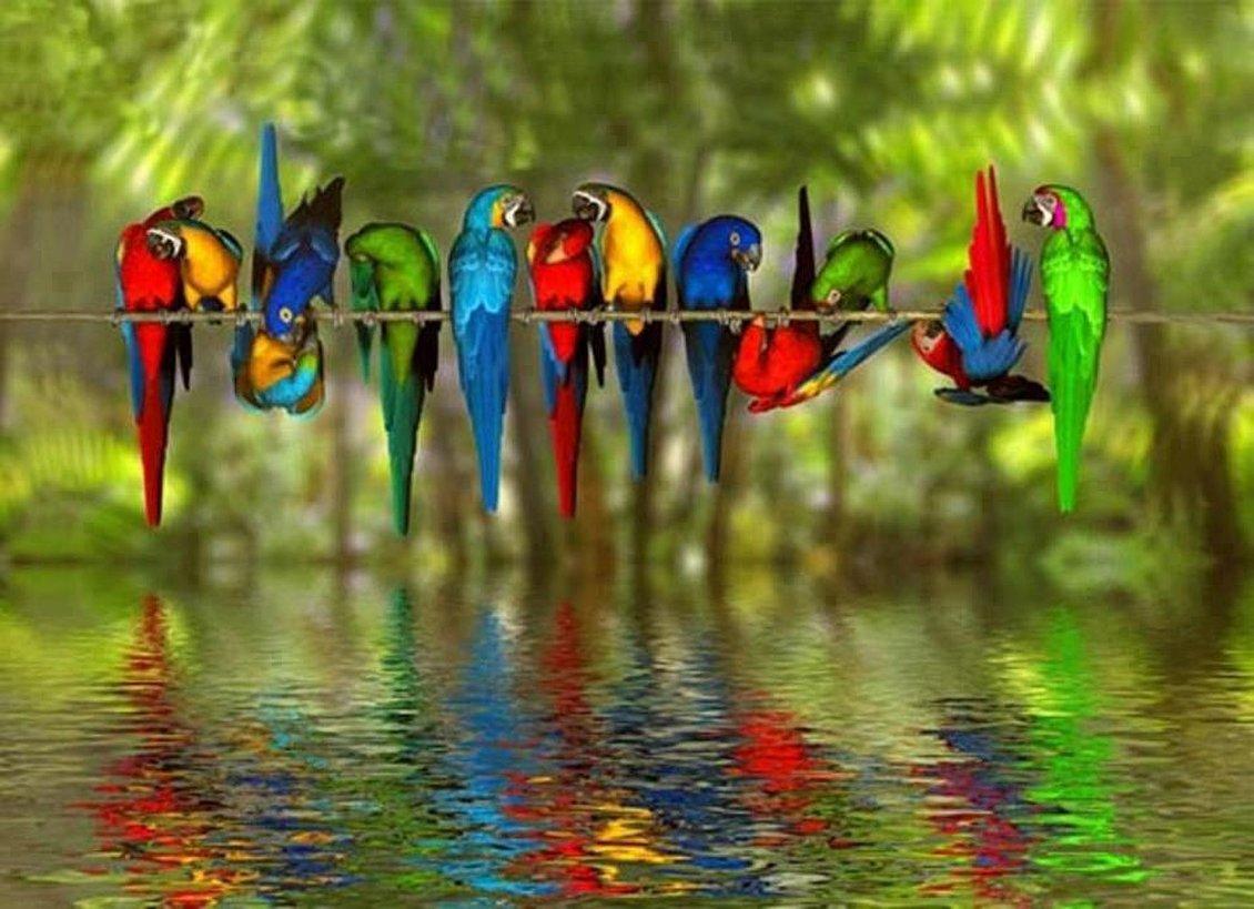 How Birds Drink Water