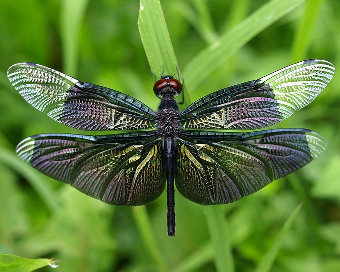 Download Wallpaper Splendid colored dragonfly insect