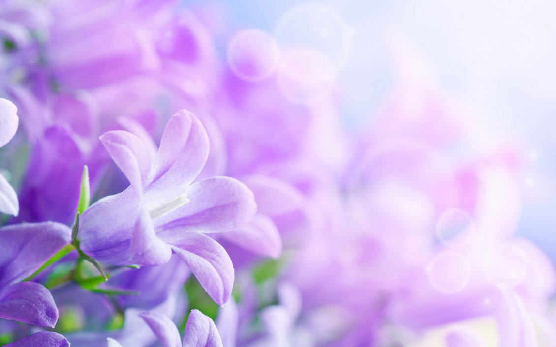 Beautiful purple flowers wallpaper izmirmasajfo