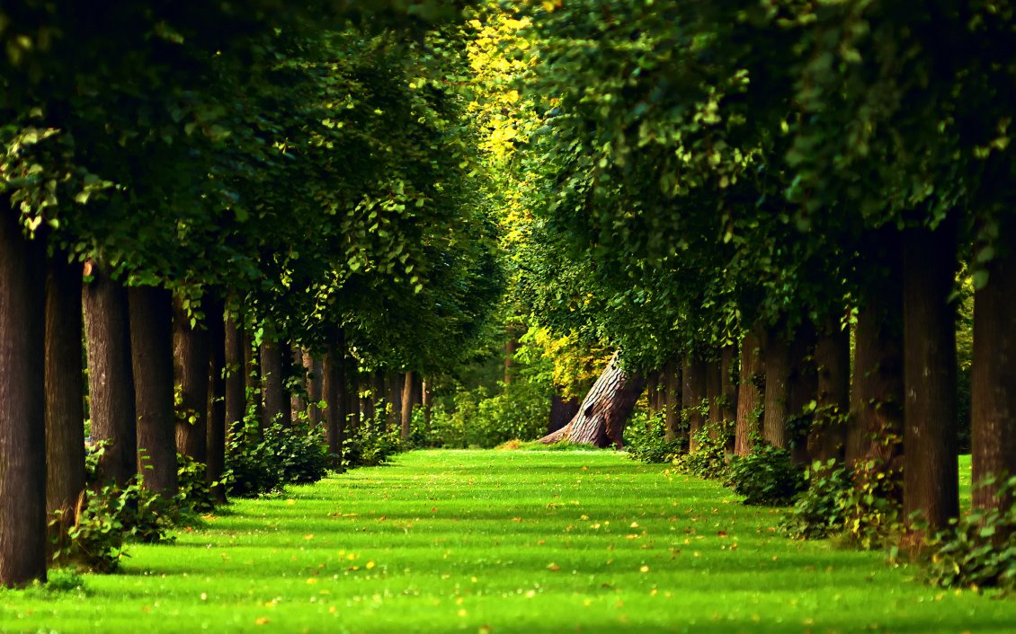 Green Nature In The Forest
