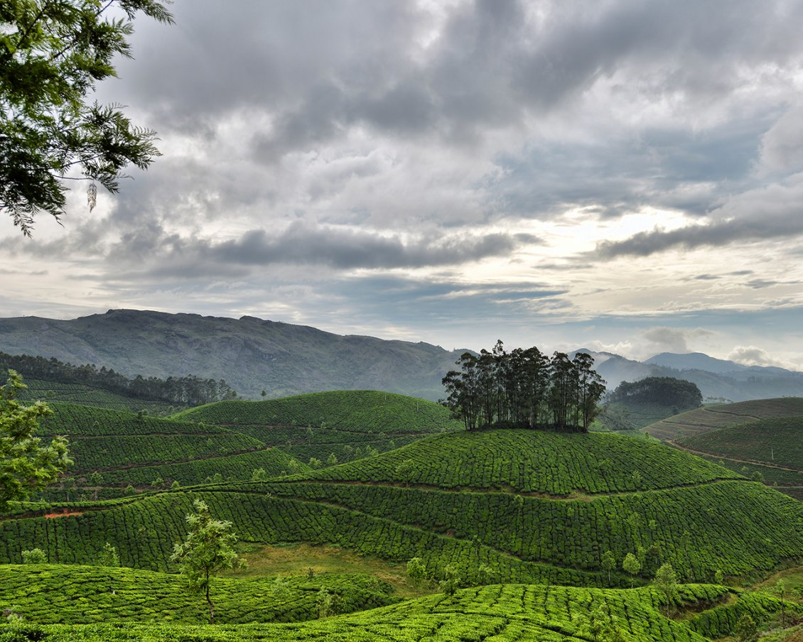 Download Wallpaper Green tea garden obscured by gray clouds