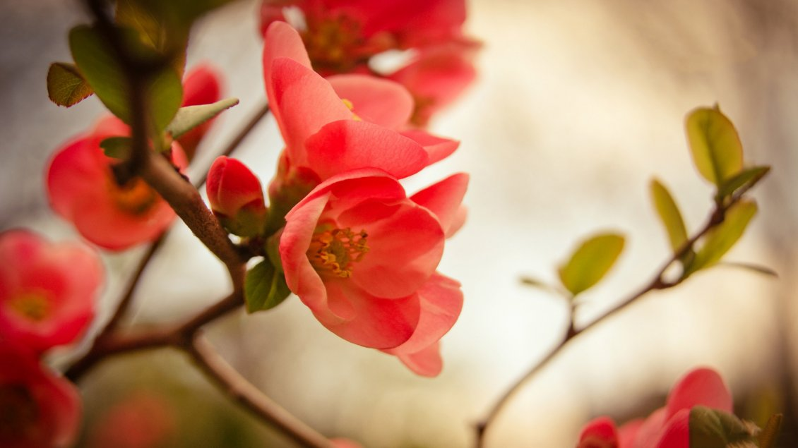 Download Wallpaper Beautiful red spring flowers in the trees