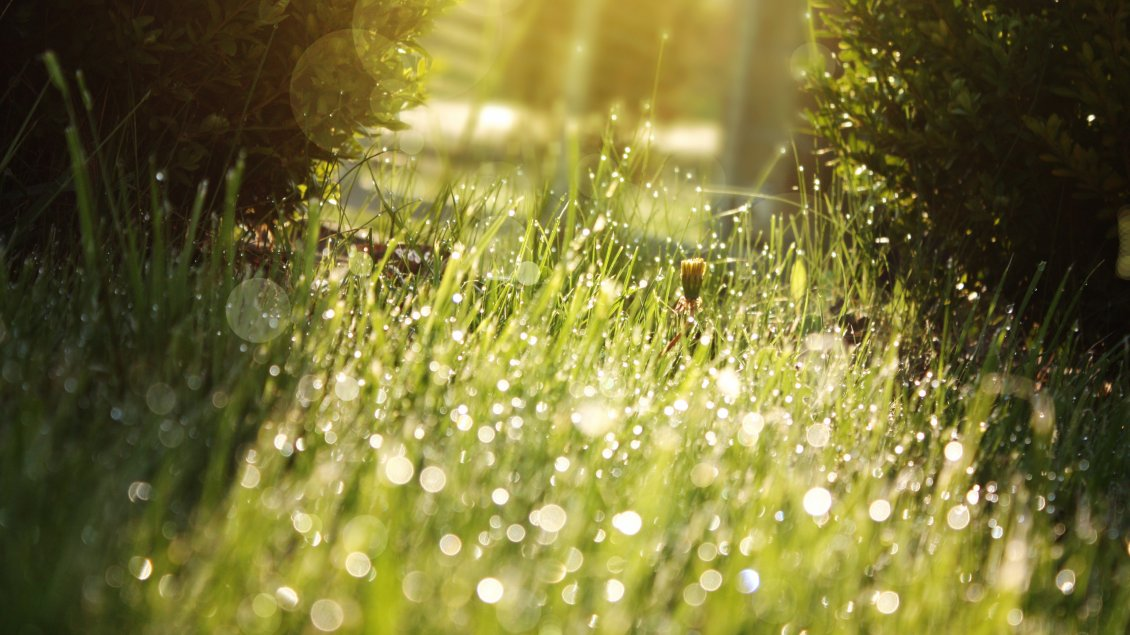 Download Wallpaper Green grass full of drops of dew in the sunlight
