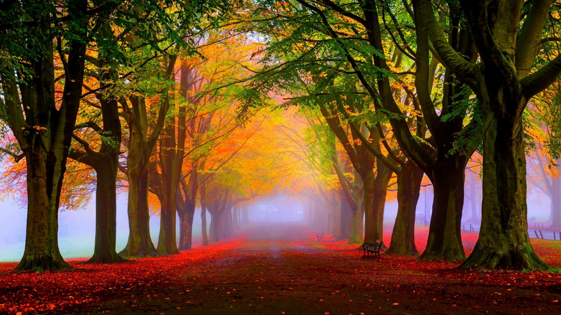 Download Wallpaper Red leaves and fog in the park - Autumn landscape