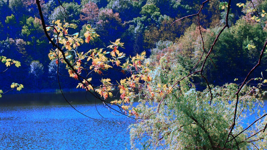 Download Wallpaper Branches with colorful leaves on the shore of river