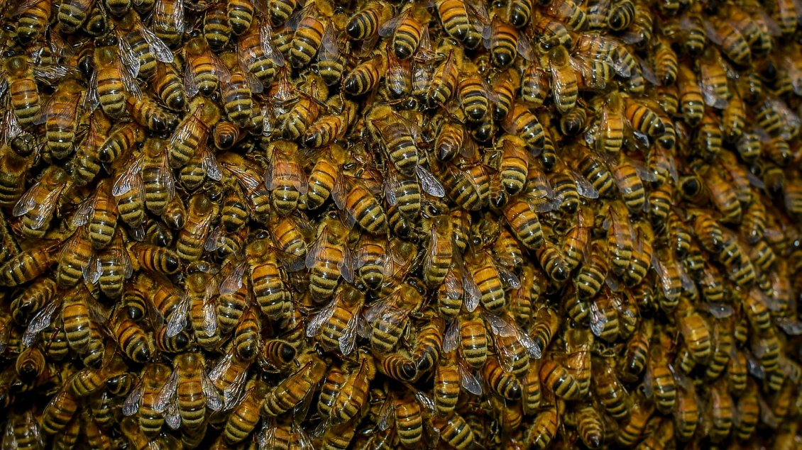 Image result for bees HD