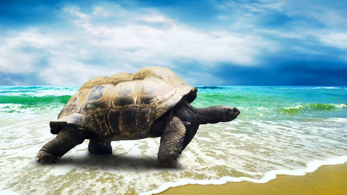 Download Wallpaper A big turtle on the beach in the sea waves