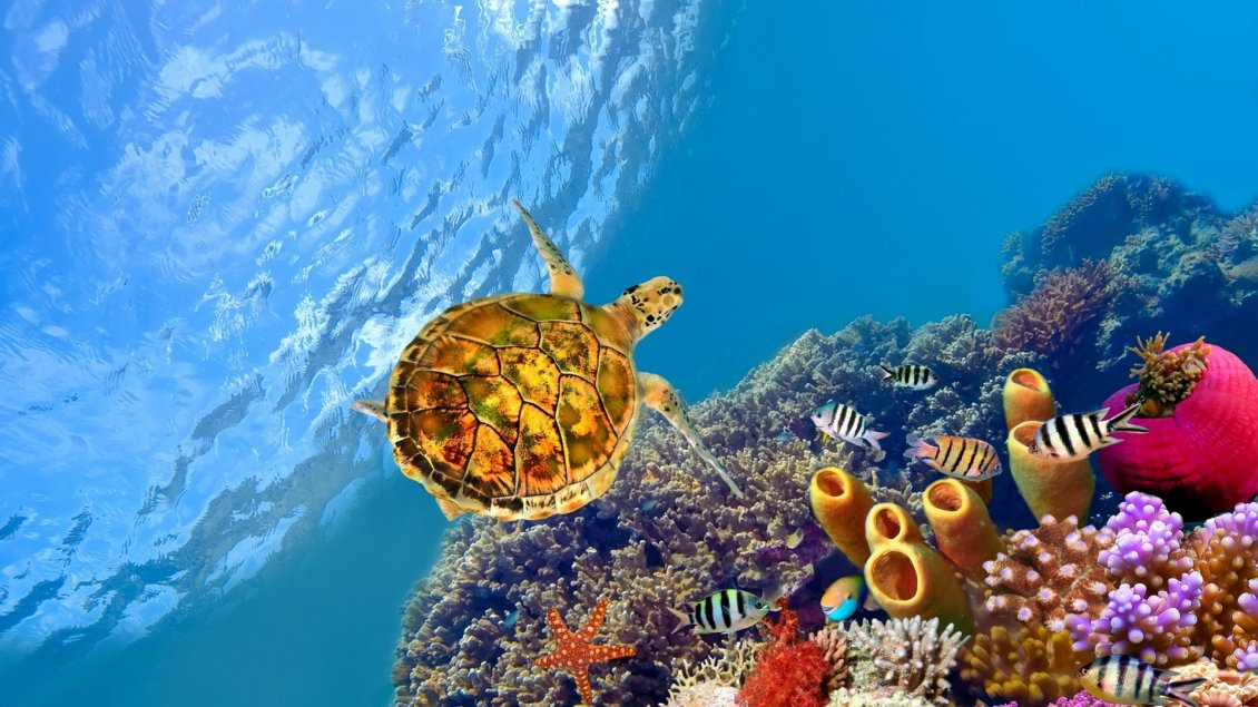 Download Wallpaper A turtle swims underwater between fish