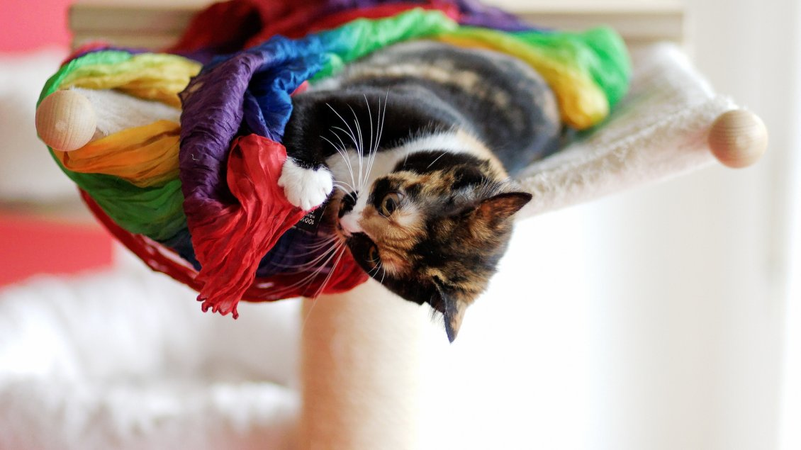 Download Wallpaper A sweet cat plays with a colored material