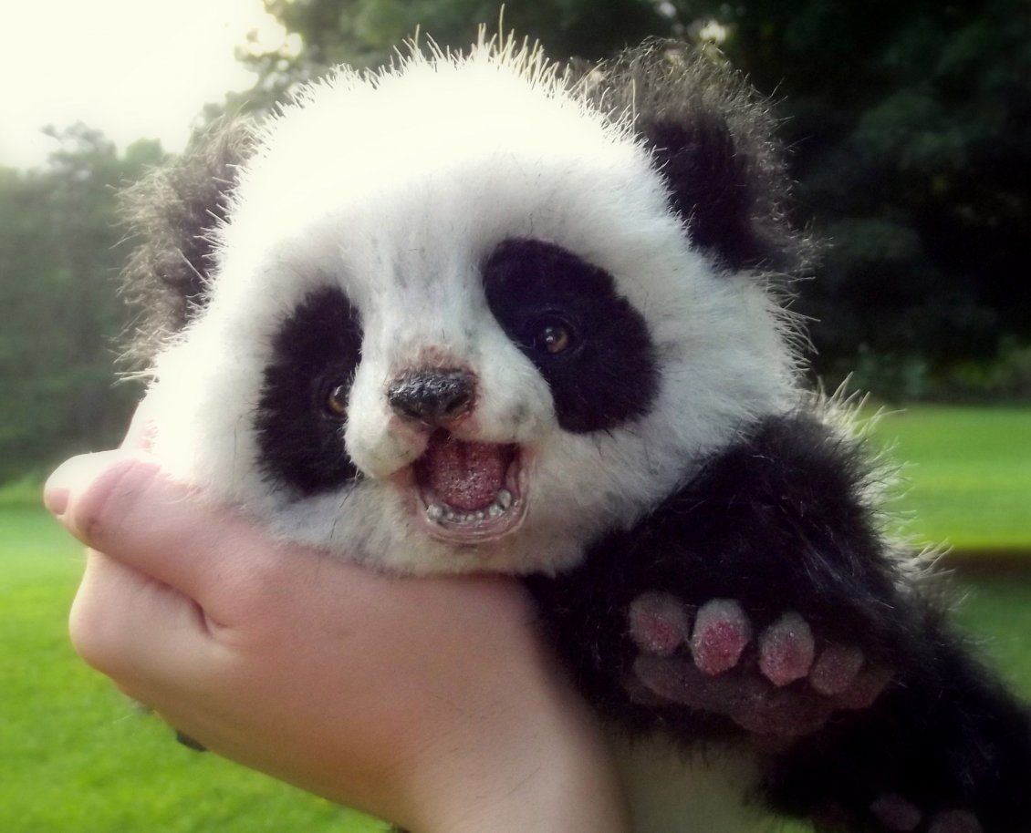 http://static.superiorwallpapers.com/images/lthumbs/2015-07/9962_Cute-panda-bear-cub-Wild-animals-wallpaper.jpg