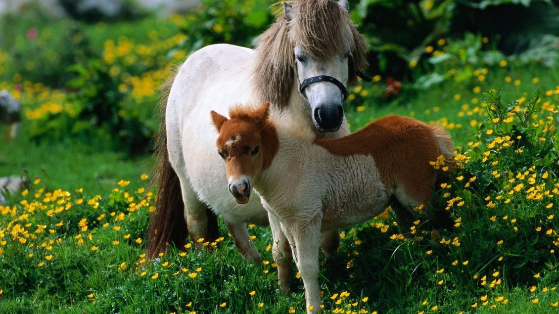 Download Wallpaper A big white horse and a foal in the grass