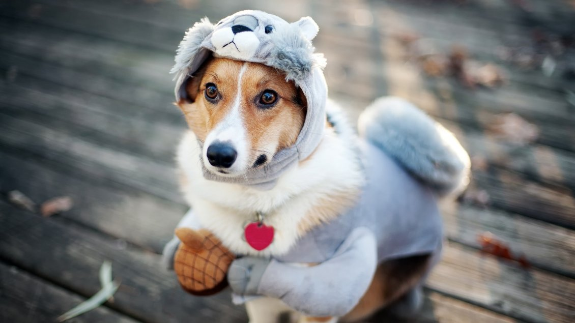 Download Wallpaper Funny sweet dog costume - Animal wallaper
