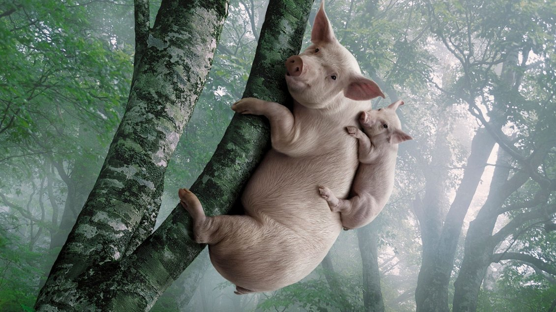 Download Wallpaper Big and small pigs in the tree - Funny wallpaper