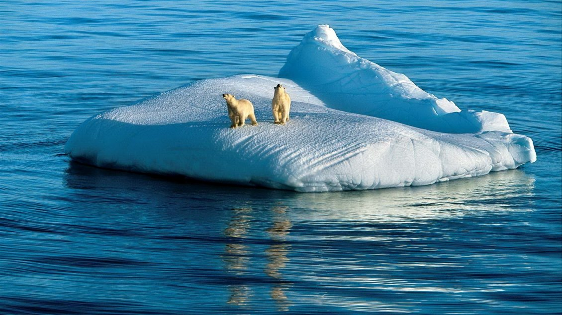 Download Wallpaper Two polar bears on the ice island in the middle of sea