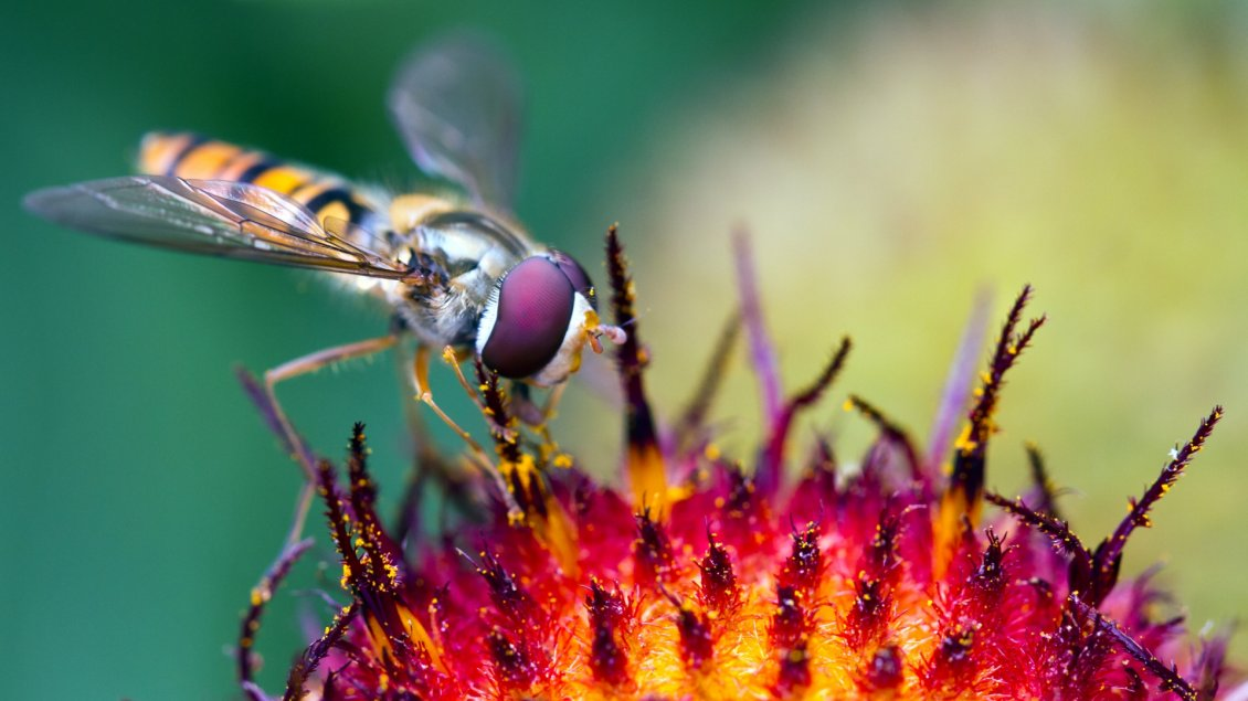Download Wallpaper A beautiful yellow and purple insect on a flower