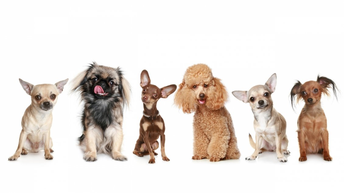 Sweet Many Different Dogs Wallpaper