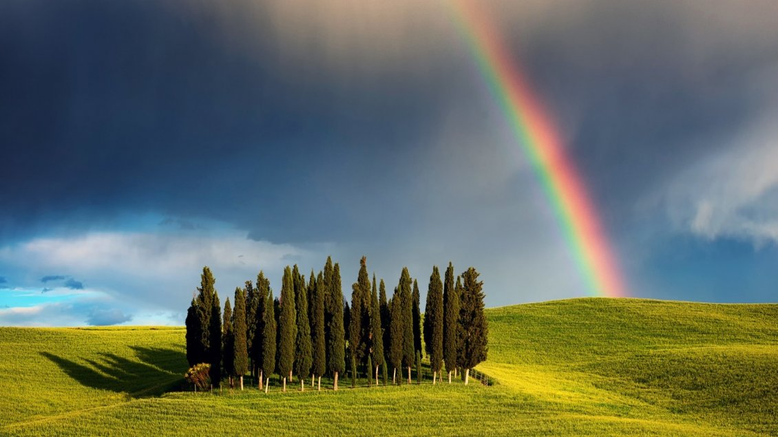 Download Wallpaper Rainbow over the few trees on hill