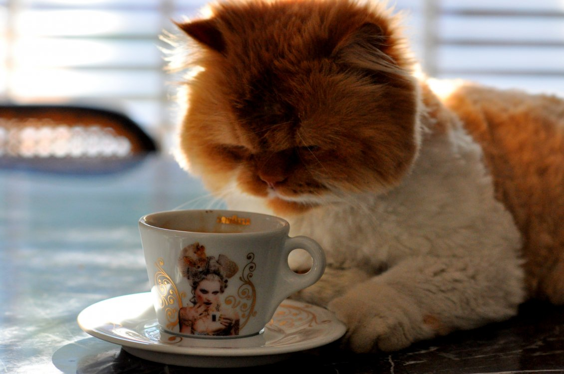 Download Wallpaper My cat loves coffee - HD funny wallpaper