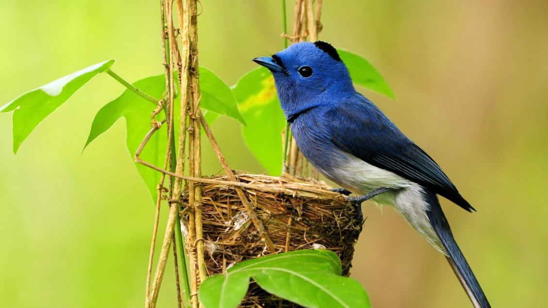Download Wallpaper A sweet blue and white bird on nest