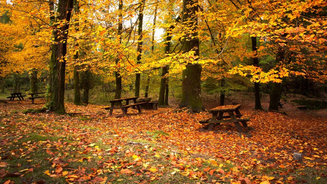 Download Wallpaper Many leaves falling down in the park